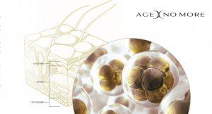 Chống lão hóa da bằng viêm uống tế bào gốc Age No More