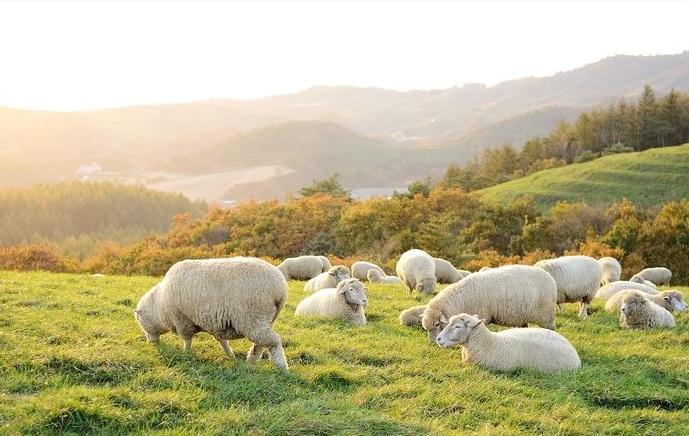 Tế bào gốc nhau thai cừu - Xu hướng mới duy trì tuổi xuân